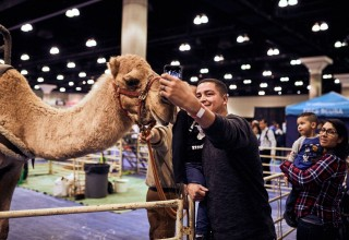 Ride a Camel at the Travel & Adventure Show in Boston on Feb 9 + 10!
