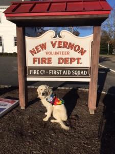 Yazzie, a golden retriever Autism Service Dog