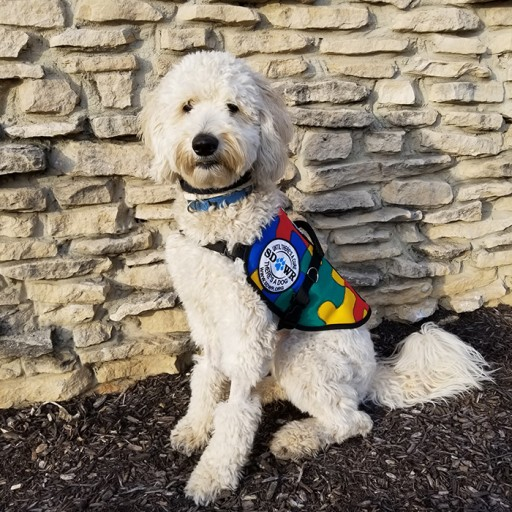 Highly Trained Autism Service Dog to Assist 11-Year-Old Child in Livingston, New Jersey