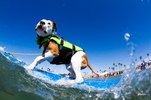 Announcing the 2016 Unleashed by Petco Double Dog Dare Surf Dog Series