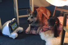 The Versatile Interactive Robot for Your Pet