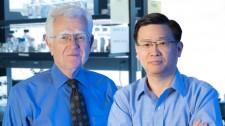 Gladstone investigators Robert Mahley and Yadong Huang