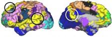 3D Brain Circuitry Map