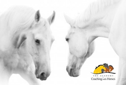 The Academy for Coaching With Horses Announces New Session for Groundbreaking Quantum Horse Program