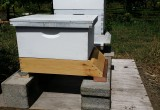 Scale Under Hive