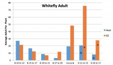 Whitfly Adult Results Heat vs. Grower Standard