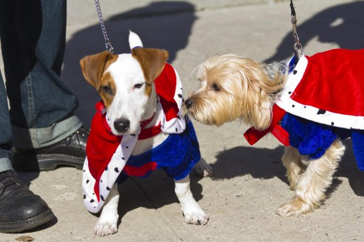 Sean Casey Animal Rescue to Host Their Biggest Pet Adoption Event of the Year at Annual Howl-O-Ween Block Party