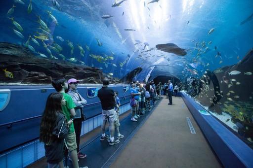 Georgia Aquarium Becomes First Aquarium Designated as a Certified Autism Center