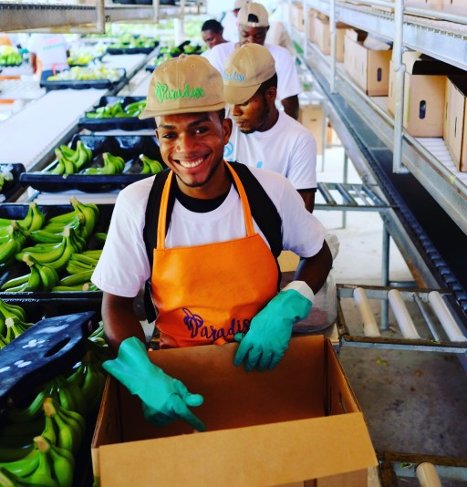 Chestnut Hill Farms Launches Partnership to Provide Organic Fair-Trade Bananas to North America