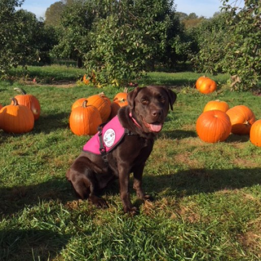Diabetic Alert Dog Delivered to 11-Year-Old Girl in Groton, Connecticut