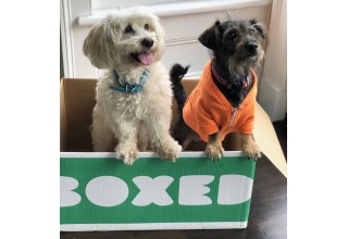 Dogly Dogs & Boxed Fans Ozzy & Houzton