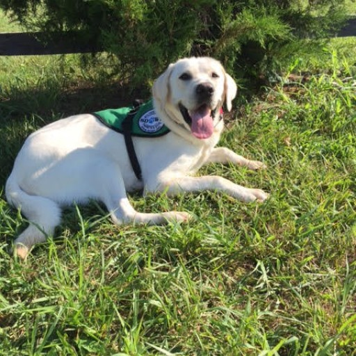Service Dogs by Warren Retrievers Delivers Diabetic Alert Service Dog to Man in Sewickley, Pa.