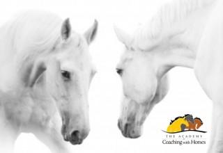Quantum Horse: Evolving Consciousness Through the Wisdom of Horse
