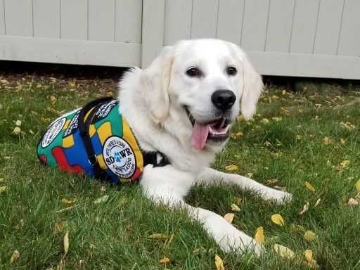 Trained Autism Service Dog to Help Five-Year-Old Child in Springfield, Oregon
