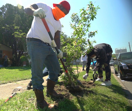 Texas Trees Foundation Kicks Off Its 'NeighborWoods' Tree Giveaway