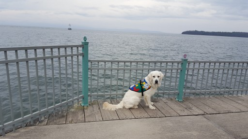 Service Dogs by Warren Retrievers Delivers Autism Service Dog to Child in  Group Lake, Illinois