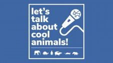 'Let's Talk about Cool Animals!'