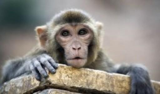 Primate Research Center Alpha Genesis Expands Research Capabilites Through Genetic Diagnostics