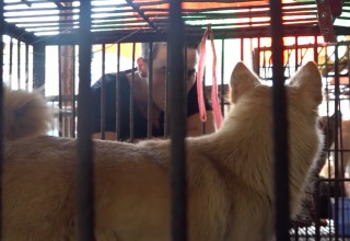 Dr. John Sessa witnessing the terror in Yulin, China
