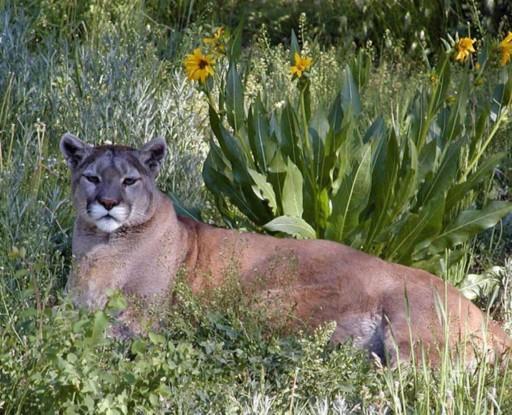 Pagosa Springs Wildlife