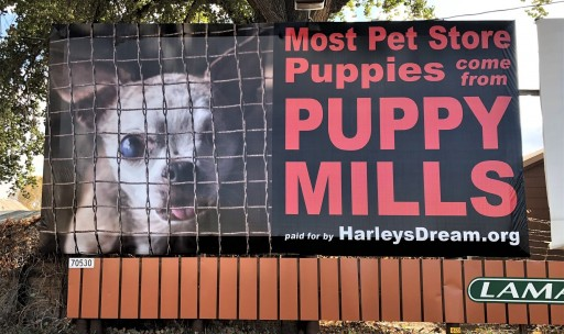 Pet Store Protest in Loveland, CO to Honor Puppy Mill Survivor
