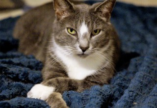 Catfe Diem will feature adoptable cats through their partner rescue Paws for Seniors
