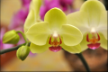 Orchid Mental Health Legal Advocacy of Colorado, Inc.