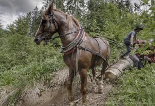 Highlander - the lumberjack