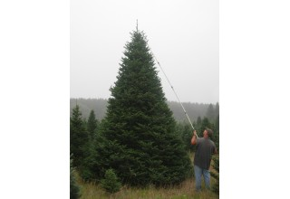 Christmas Tree Maintenance and Care