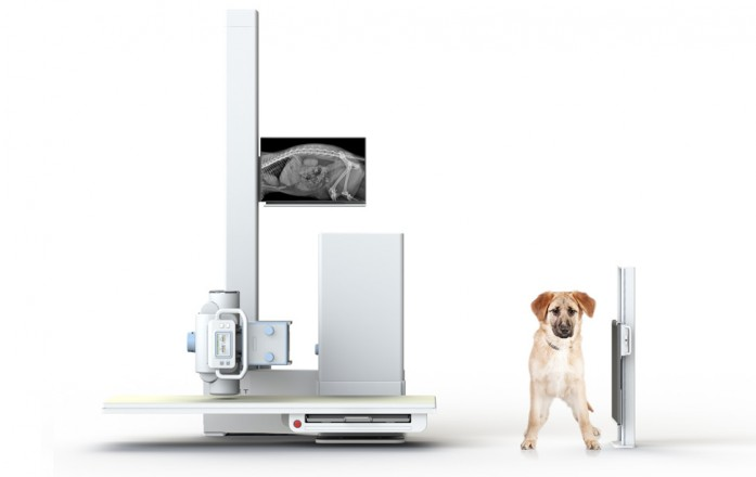 MyVet Imaging Table Horizontal Beam Exam