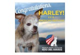 Harley when he became the 2015 American Hero Dog