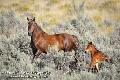 BLM Targets Colorado Wild Horse Herds