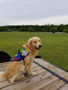 SDWR Autism Service Dog - Theo