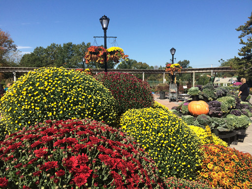 Fall Gardening Tips From Hicks Nurseries