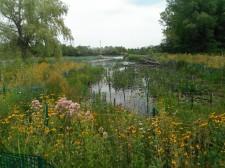 Habitat Restoration Project, Kleinschmidt
