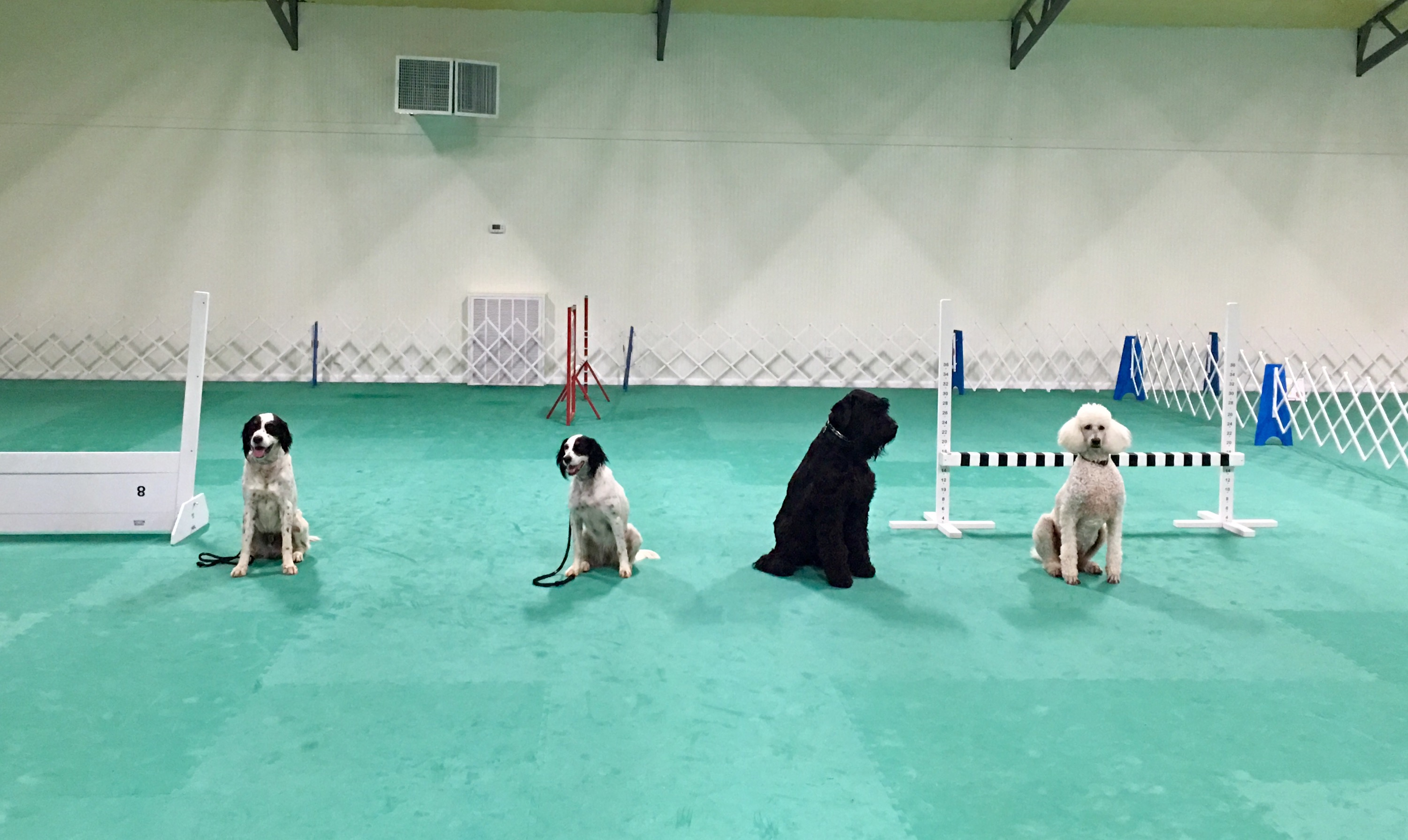 Greatmats Cushioned Dog Training Floor Adds Safety to Dream