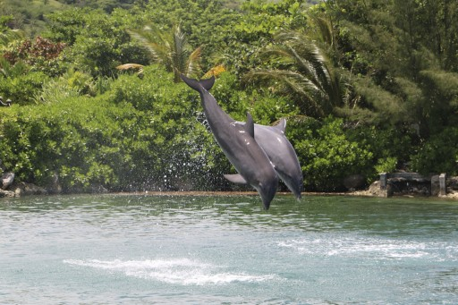 Dolphin Discovery Earns Certified Autism Center Designation