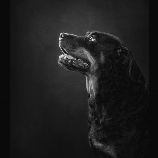 Arkansas Pet Photographer Wins Awards for Outstanding Pet Photography