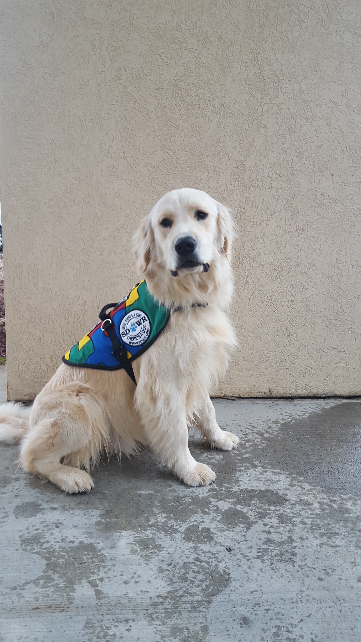 Madison Service Dog Training