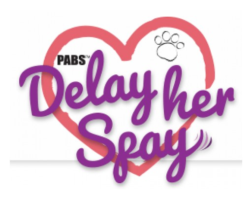 Delay Her Spay Harness & Dog Diapers Offers a Non-Invasive Breeding Control Harness