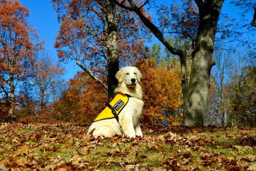 Godfrey, Illinois Child Set to Receive His Autism Service Dog From Service Dogs by Warren Retrievers