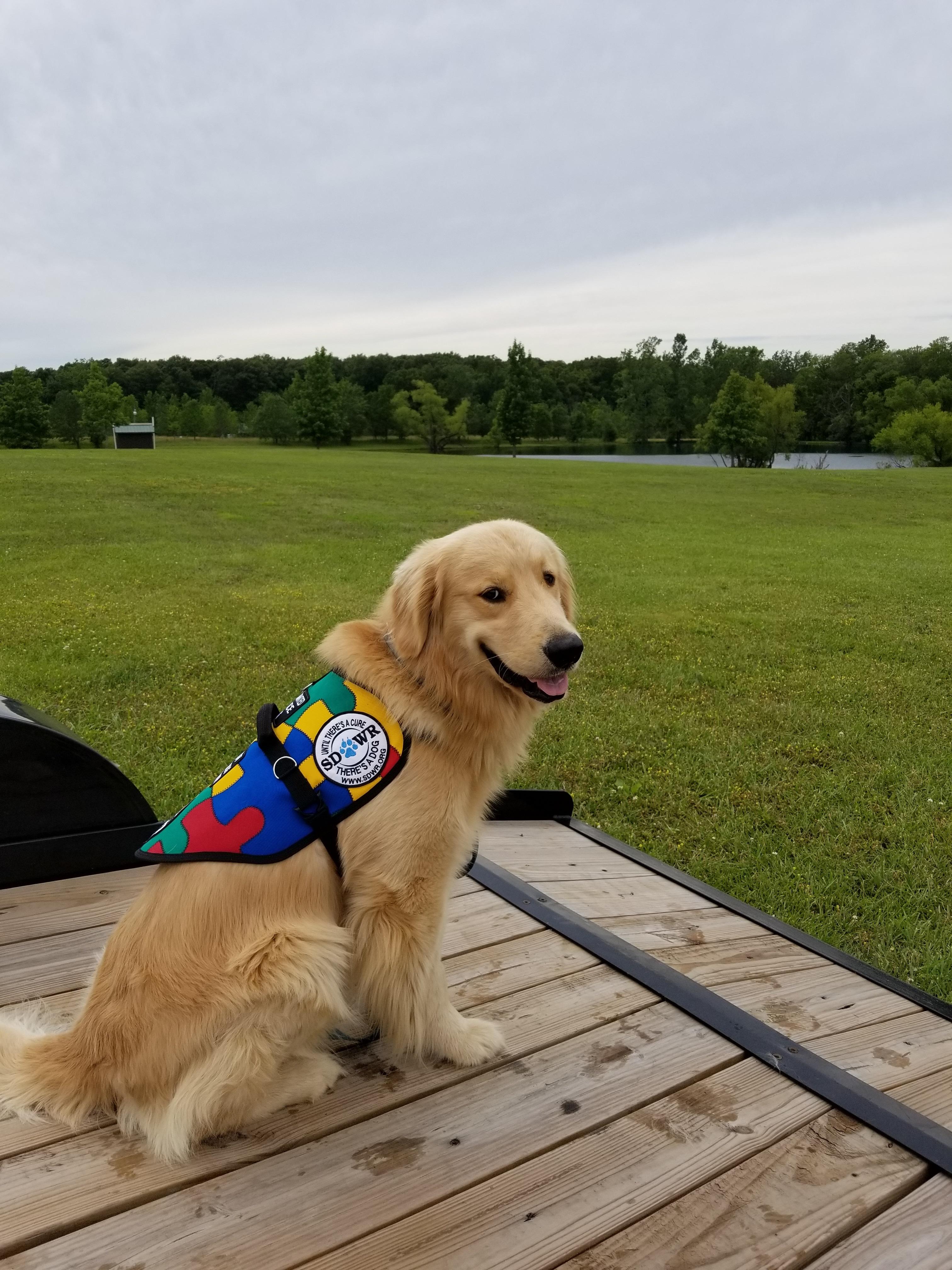 Madison Ohio Dog Training