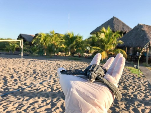 Nicaraguan Hostel Saving Sea Turtles on an Unprotected and Remote Beach.