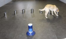 Dogs can find the scent of a seizure