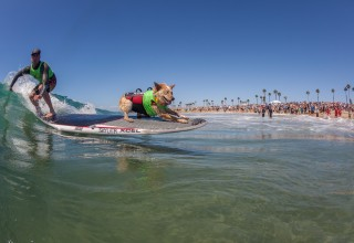 Skyler the surf dog tandem surfing with human Photo by Daren Fentiman