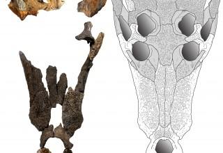 Deltasuchus motherali