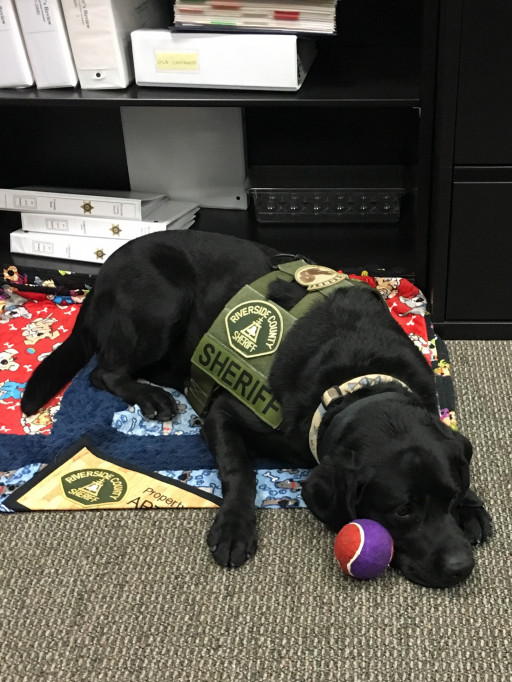 Coby Certified PAVE Support Dogs Accepted Into the United States Capitol Police Department & the Ontario Police Department