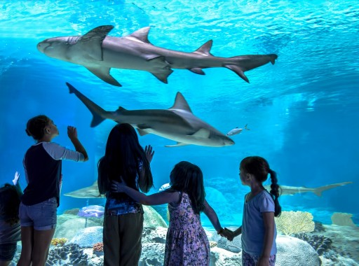 OdySea Aquarium is First Attraction in Arizona to Become a Certified Autism Center
