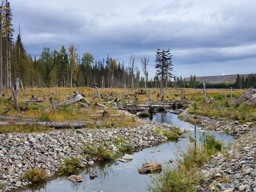 Imperial Metals Congratulates Mount Polley Remediation Expert Dr. 'Lyn Anglin