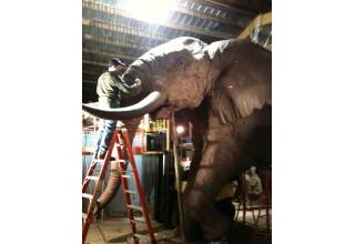 Lorenzo Ghiglieri's Elephant Monument